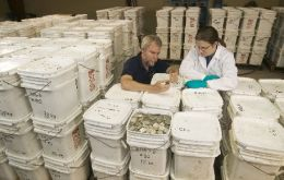 "Odyssey co-founder Greg Stemm, left, examines coins recovered from the ""Black Swan"" shipwreck"