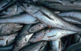 Hake landing were 13% less than in 2006