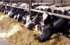 Dairy farms will have to wait until after the Elections for solutions