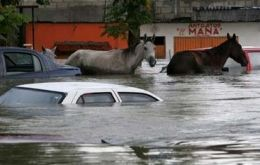 Stranded horses stands amongst submerged cars