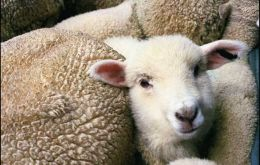 Sheep farmer banned to export lambs and mutton to the EU