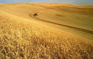 The suspension of the tariff is valid for one million tons of wheat