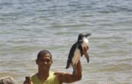 A young fellow holds up a penguin at the Porto da Lenha beach in Salvador
