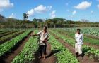Highly dependent on food imports, Cuba is desperate to promote agriculture.