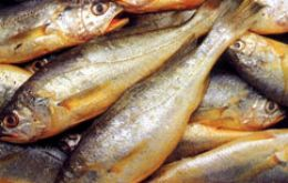 The vessels had 90 tons of yellow croaker a common and abundant species in the River Plate