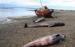 The dead whales were found in an area rich in marine life