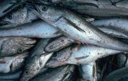 Tons of hake are daily tossed back to sea as waste