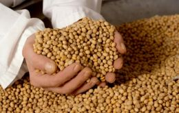 Soybeans have become Argentina's main export item