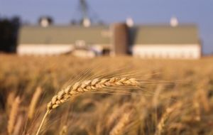 The heaviest penalized imports were US wheat sales with tariff increases to 30% from 10%