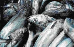 Eighty per cent of adult hake have disappeared from the Argentine sea as a result of overfishing, FVSA states.