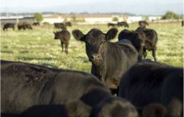 Latinamerica contributes with 41% of world beef exports
