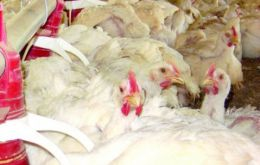 Prices will have an impact on feed for pigs and poultry