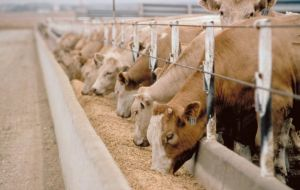 Fears about consequences to the EU livestock industry