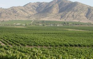 Chile's valleys next to the Andes covered in vines for excellent wines