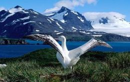 South Georgia contains millions of seabirds threatened by non-native mammals