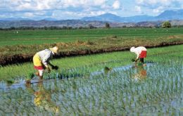 Government protects Japanese rice farmers with a 778% tariff on imports
