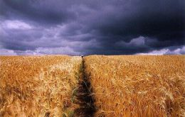 USDA estimates Russian wheat crop is down at least 15%