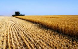 Drought and fire slashed the wheat production of Russia and Ukraine