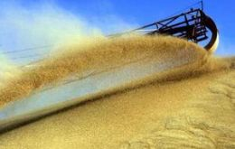 Wheat prices have soared 60-80% since July while maize spiked about 40%.