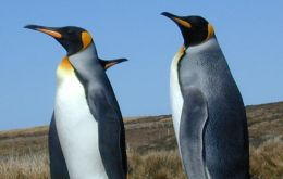 "The scientists nicknamed the penguin ""Pedro"""