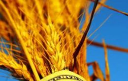 Soaring wheat prices force hikes in substitutes