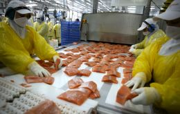 Salmon was a 2 billion US dollars industry from 2007 to 2009