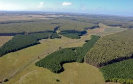 Forestation projects in Uruguay, mostly eucalyptus