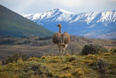 Patagonian landscape: many more species to be discovered