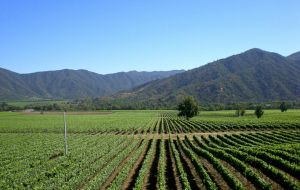 Plans to double exports and add 26.667 hectares of vineyards by 2020
