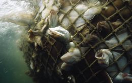 About 32% of world fish stocks are estimated to be over-exploited or depleted