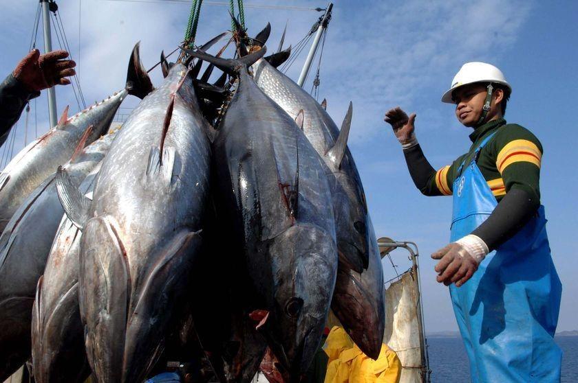 Британские импортеры морепродуктов критикуют европейский запрет ЕС на импорт рыбы из Шри-Ланки