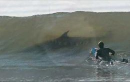 Surfers were the main target of the water predators