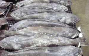 Valuable toothfish suffers from illegal, unreported, unregulated fishing