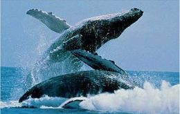 They demand respect for the Southern Whale Sanctuary
