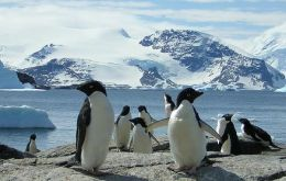 Chinstrap and Adelie penguin numbers had been falling since 1986