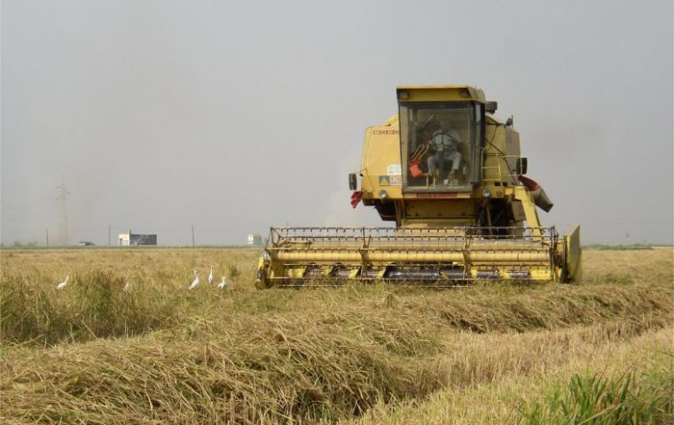 Improved weather conditions are helping rice prospects