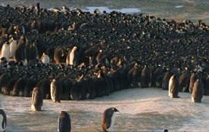 The almost imperceptible waves of the huddled penguins were captured in video