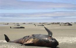 Dead whales ingested with plastic have appeared in seas round the world