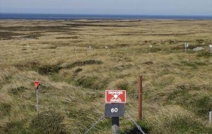 A common sight in the Falklands, almost 30 years after the Argentine occupation
