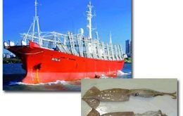 In the first eight months, 69.618 tons of squid were landed in Argentine ports