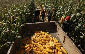 FAO calls for promotion of private investment and increases farm productivity
