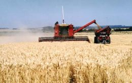 Income from wheat has increased 33 fold in a decade
