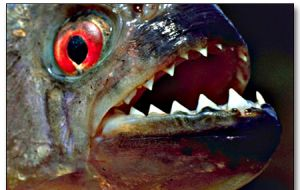 The ferocious razor-tooth flesh eater fish had never been seen in the beach
