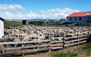 Many elements of rural life in the Falklands and Patagonia were very similar and equally rugged.