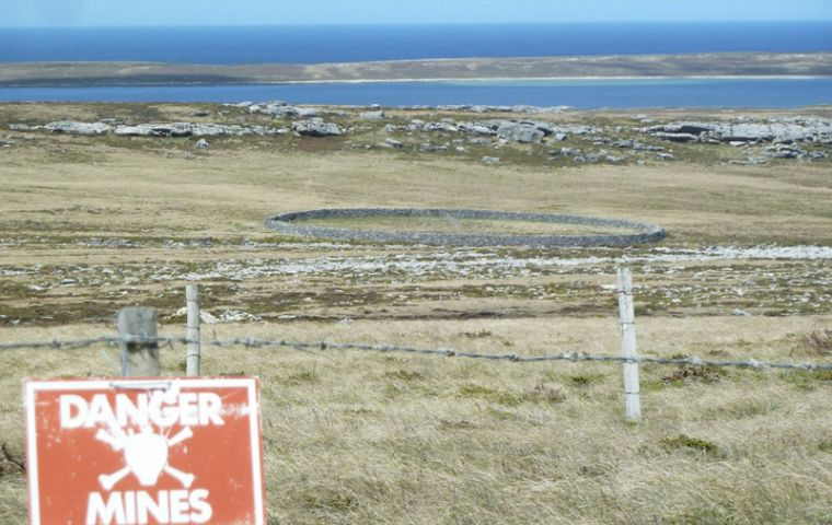 Sappers Hill Corral, the large stone-walled corral, a Falklands' landmark, remains behind minefield fences.