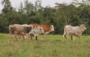 Livestock movement and transport in Paraguay strictly regulated