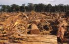 Every year an area the size of Costa Rica is lost to deforestation