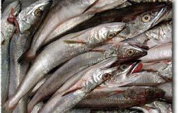 Croaker and hake among the main species exported