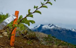 The first tree of the Reforestemos Patagonia campaign is planted. (Photo courtesy of Reforestemos Patagonia)