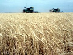 This coming harvest will see 3.8 million hectares planted with wheat
